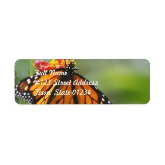 Mariposa del virrey etiquetas de remite