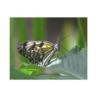 Mariposa delicada lona envuelta para galerias