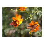 Mariposa doble tarjetas postales