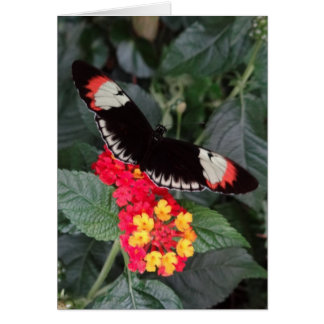 Mariposa dominante Notecard del piano Tarjeta Pequeña