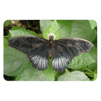 Mariposa e imán tropicales bonitos de Flexi de las