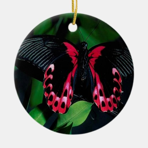 Mariposa elegante animal abstracta adorno