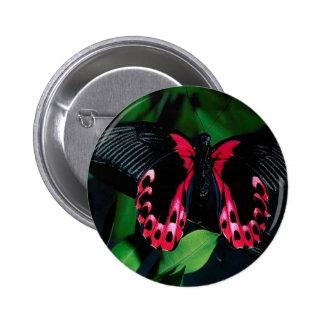 Mariposa elegante animal abstracta pins