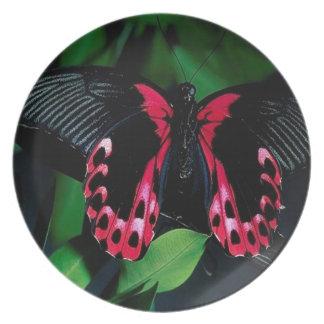 Mariposa elegante animal abstracta plato de cena