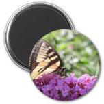 Mariposa en arbusto de mariposa imán para frigorífico