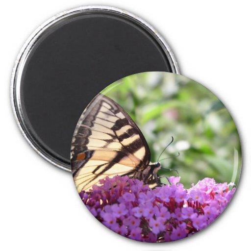 Mariposa en arbusto de mariposa imán redondo 5 cm