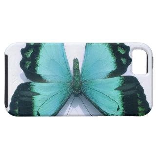 Mariposa en blanco iPhone 5 cárcasa