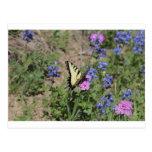Mariposa en Bluebonnet Postal