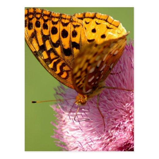 Mariposa en cardo postal