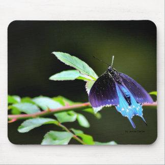 Mariposa en descanso mouse pads