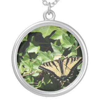mariposa en el collar de la hiedra