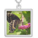 Mariposa en el collar rosado de la flor