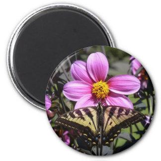 Mariposa en el flor de la flor imán de frigorífico