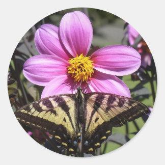 Mariposa en el flor de la flor etiquetas redondas