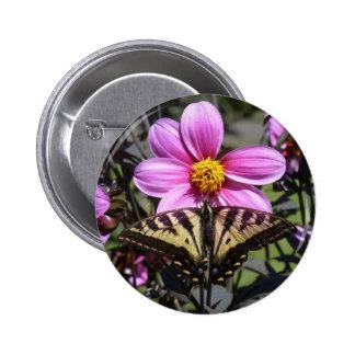 Mariposa en el flor de la flor pins