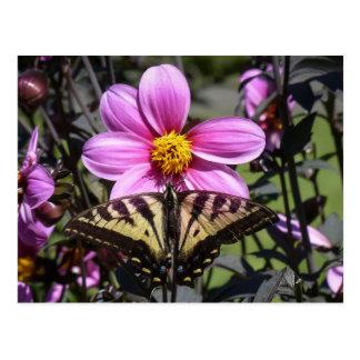 Mariposa en el flor de la flor postales