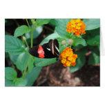 Mariposa en el flor felicitaciones