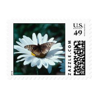 Mariposa en el franqueo 1Sm de la margarita