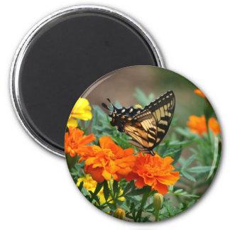 Mariposa en el imán anaranjado y amarillo de las f