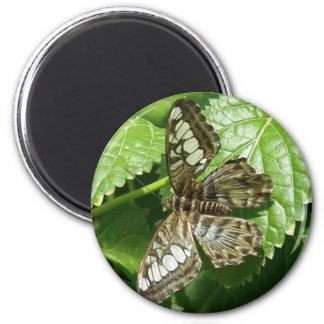 Mariposa en el imán de la hoja