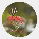 Mariposa en el pegatina real de Poinciana