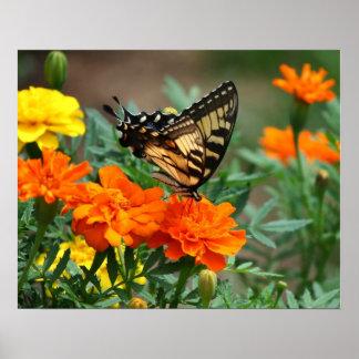 Mariposa en el poster anaranjado y amarillo de las