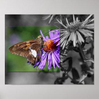 Mariposa en el poster blanco y negro de la flor de