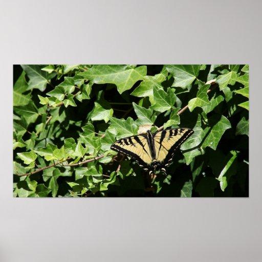 mariposa en el poster de la hiedra