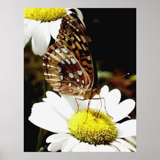 Mariposa en el poster de la margarita