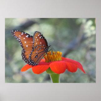 Mariposa en el poster del girasol mexicano