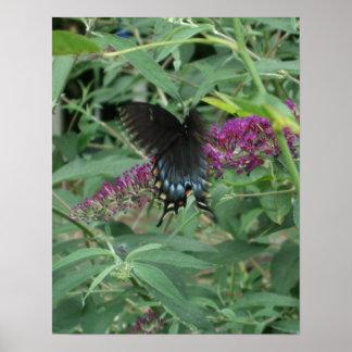 Mariposa en el poster la impresión del movimiento