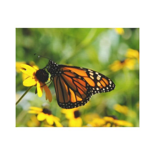 Mariposa en el verano lona estirada galerias