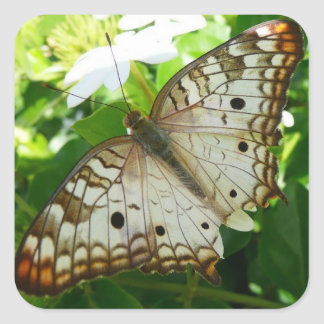 Mariposa en fotografía tropical de la naturaleza pegatina cuadrada