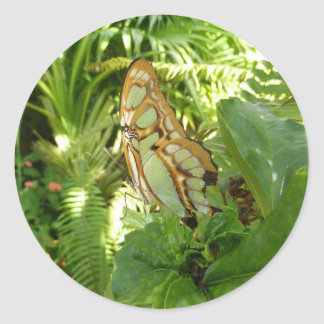 Mariposa en fotografía tropical de la naturaleza pegatina redonda