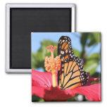 Mariposa en hibisco imán