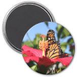 Mariposa en hibisco imanes para frigoríficos