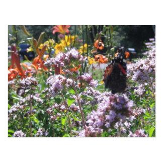 Mariposa en jardín postales
