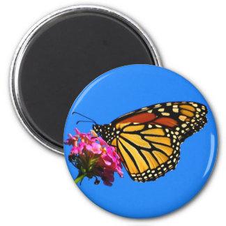 Mariposa en la comida fría iman