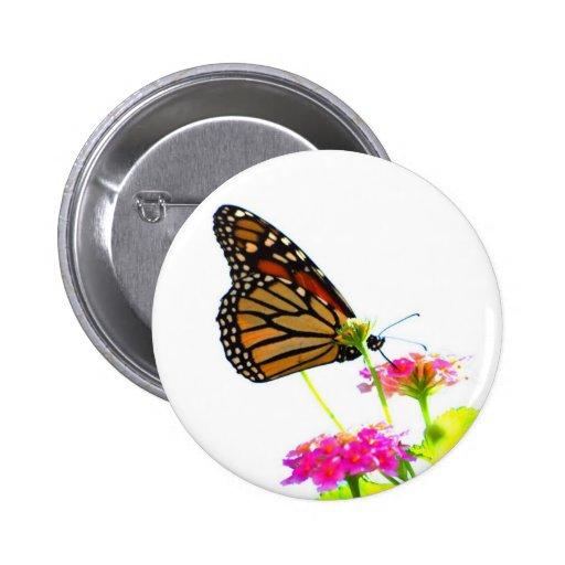 Mariposa en la comida fría pin