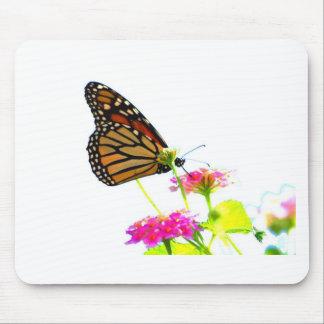Mariposa en la comida fría tapete de raton