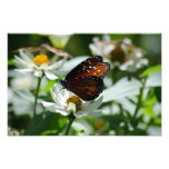Mariposa en la flor blanca cojinete