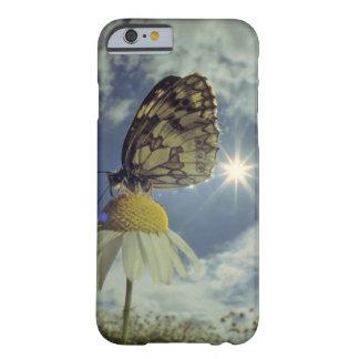 Mariposa en la flor de la manzanilla con el sol, funda de iPhone 6 barely there