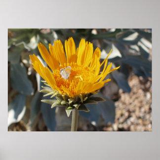 Mariposa en la flor del Sunray Poster