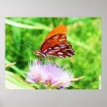 Mariposa en la flor impresiones