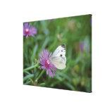 Mariposa en la flor lona estirada galerías