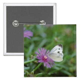 Mariposa en la flor pin cuadrado
