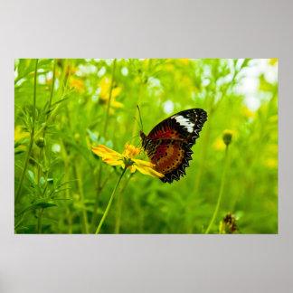 Mariposa en la flor póster