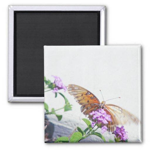 Mariposa en la flor púrpura imán cuadrado