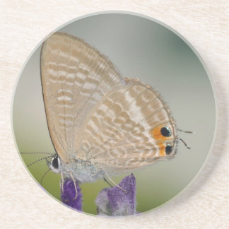 Mariposa en la flor púrpura posavasos manualidades