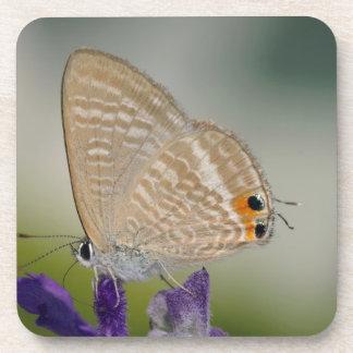Mariposa en la flor púrpura posavaso